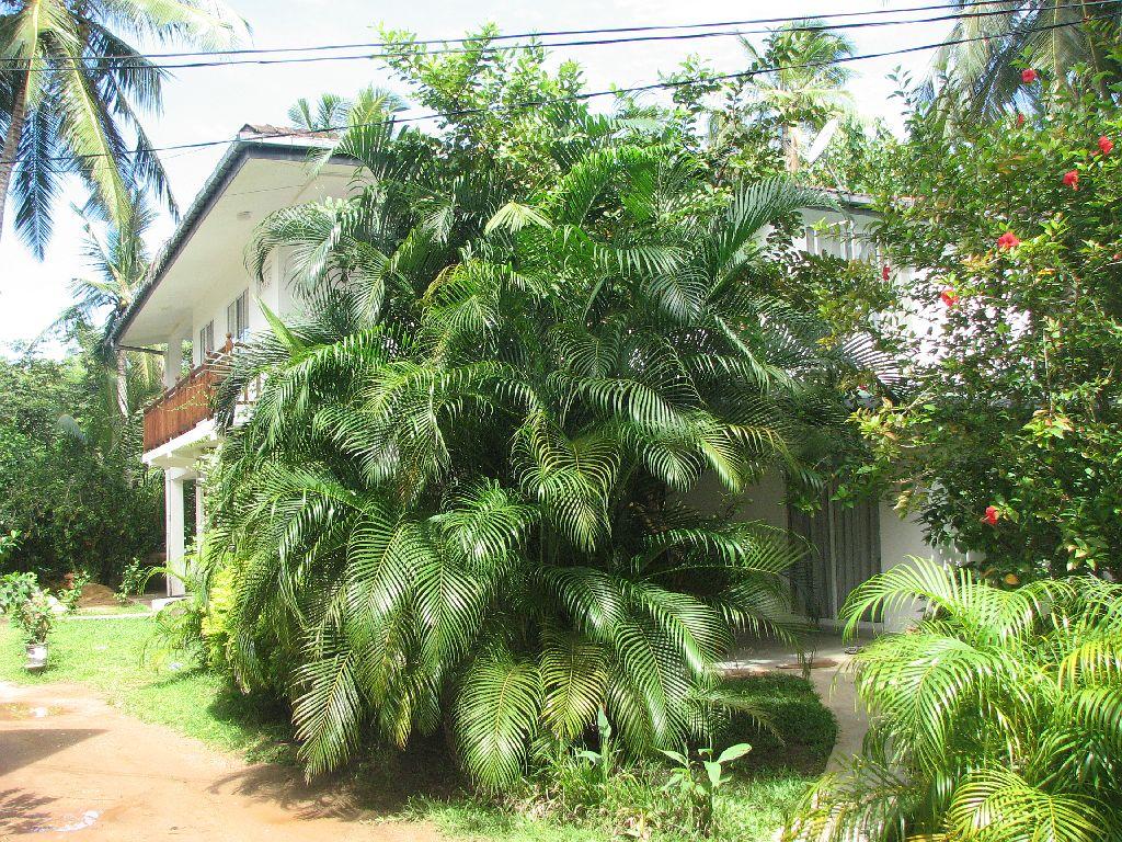 UNAWATUNA Apartments. Photo of hotel. Photo #3